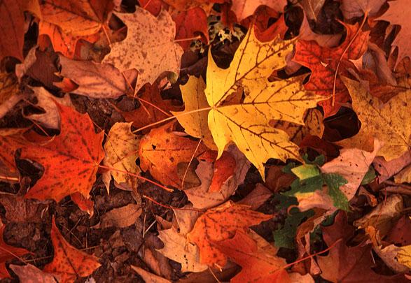 2019 Fall Leaf Pick Up